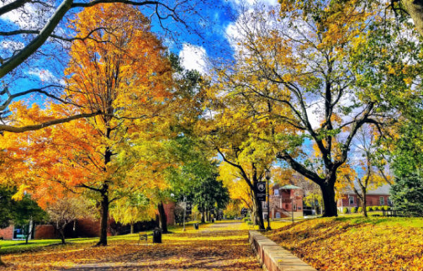 Penn State Schuylkill's mall walk covered in yellow, orange, and red leaves during fall.