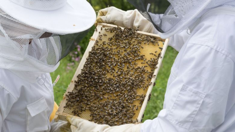 Beekeepers with frame
