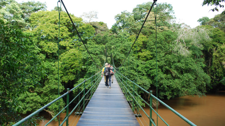 Penn State students cross a suspension bridge as they descend into the Costa Rican jungle.