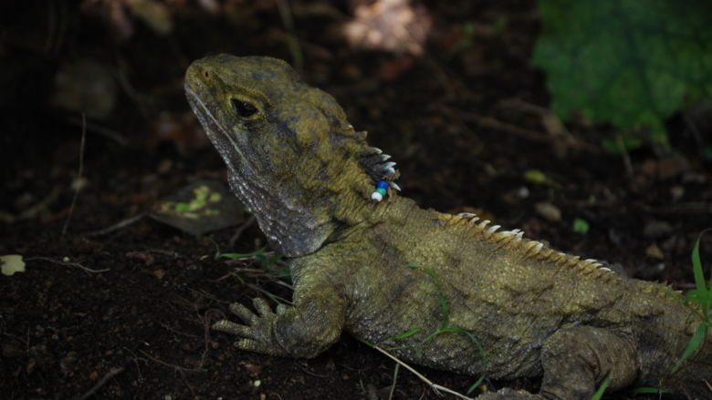 Beaded iguana poses for a photo