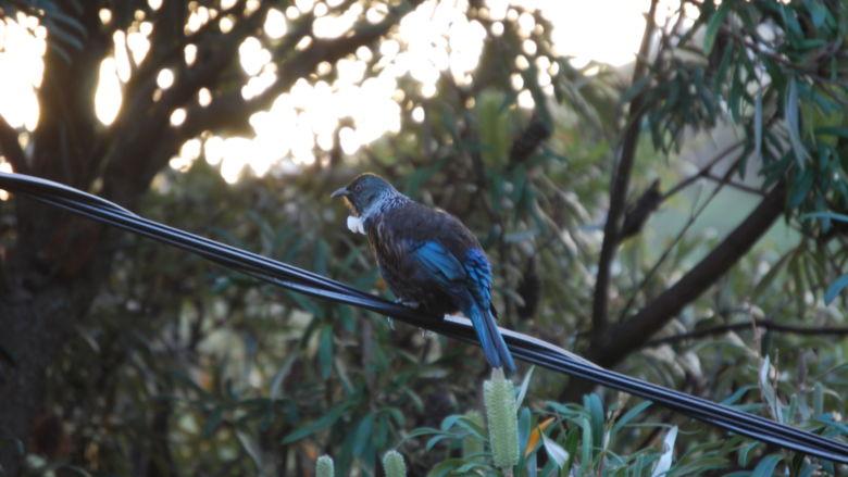 A bird enjoys the last few moments of sunshine