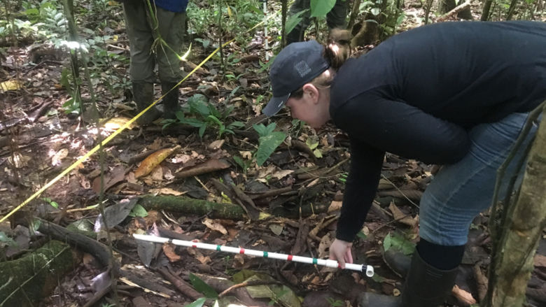 Schuylkill campus student Alyssa marks a square meter of their research transect using a meter long stick as she prepares to count saplings and seedlings.